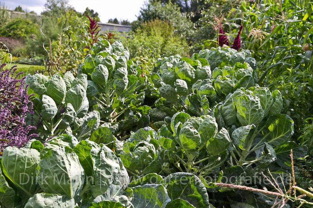 Foto: Gemüsebeet mit Rosenkohl