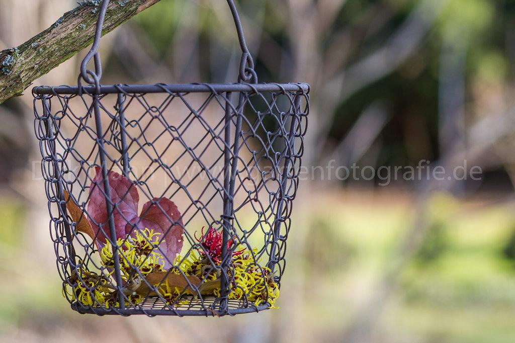 Metallkörbchen mit Blüten der Hamamellis