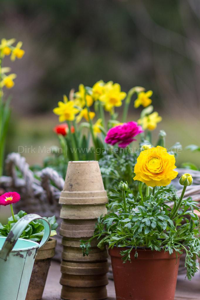 Frühjahrsblüher als Komposition