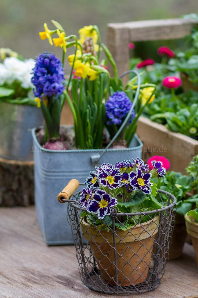 Foto: Frühjahrsblüher in bunter Mischung