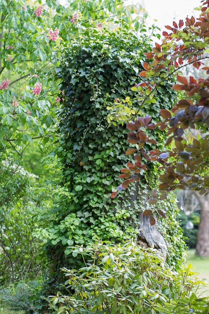 Bild: Bewachsener Baumstamm
