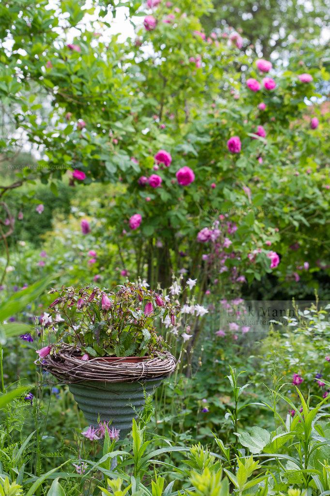 Bild: Gartendeko vor blühender Strauchrose