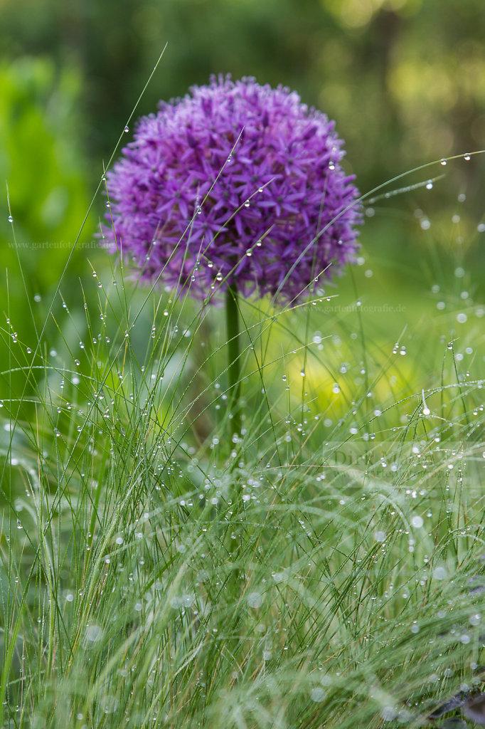Bild: Tautropfen am Gras