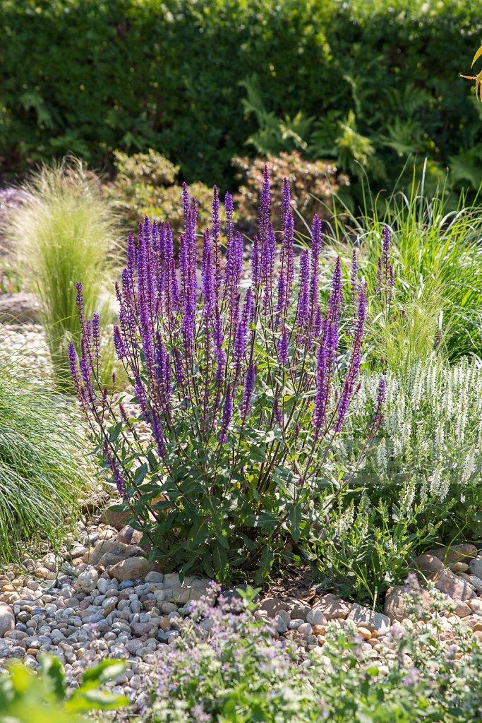 Gartenfotografie - Blühende Momente in Garten und Natur