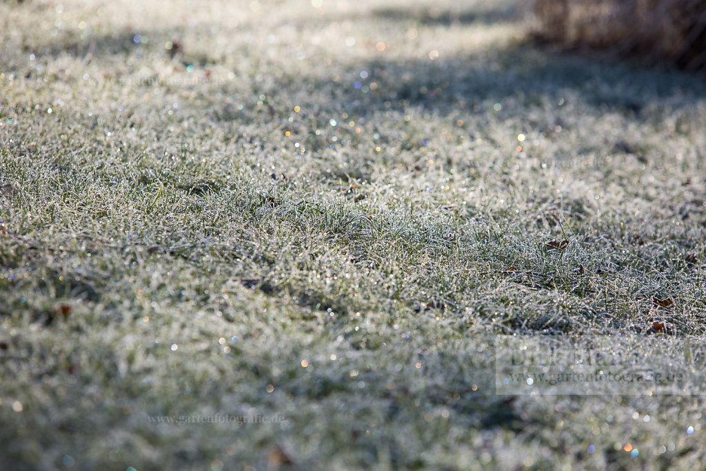 Bild: Lichtspiel im gefrorenen Rasen