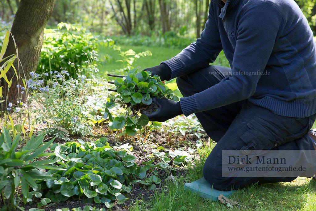 20200402-Gartenfotografie-news.jpg